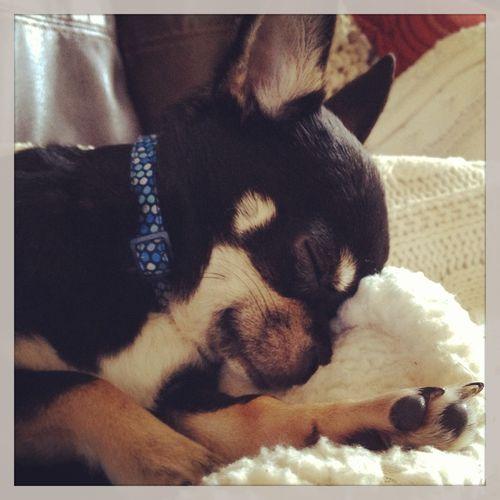Louie snuggles
